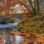 Enhance Your Autumn Images